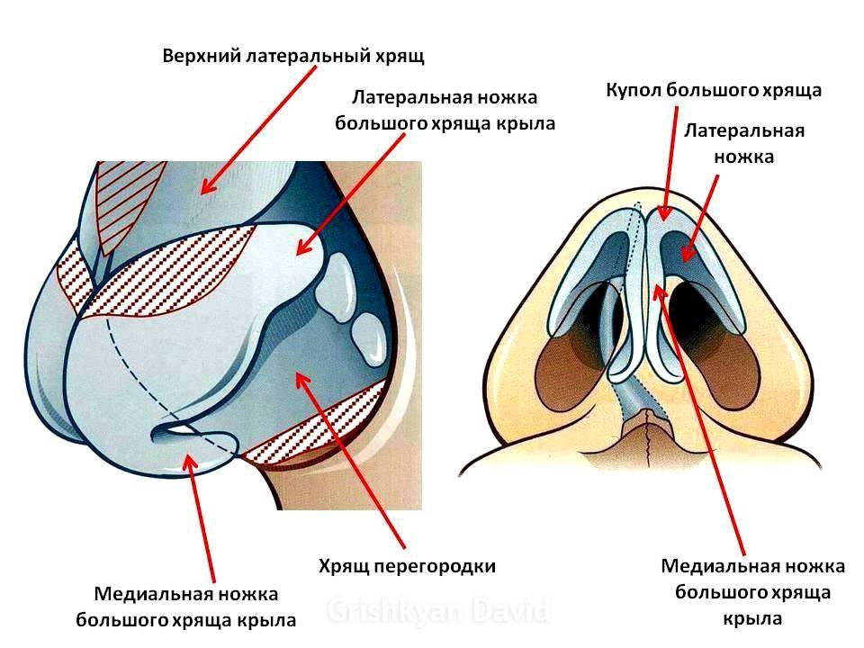 Изменение проекции кончика носа